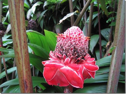 Costa Rica 07.04.12 045